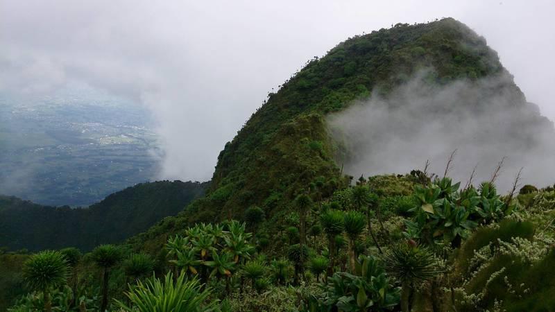 Mountain Gorilla Protection